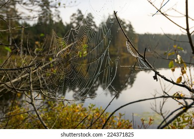 Autumn spider web on the lake coast
