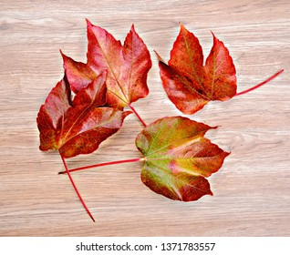 autumn still life- colorful wine leaves on wooden ground