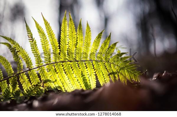 Autumn still life, fern in a leafy forest, Slovak Republic