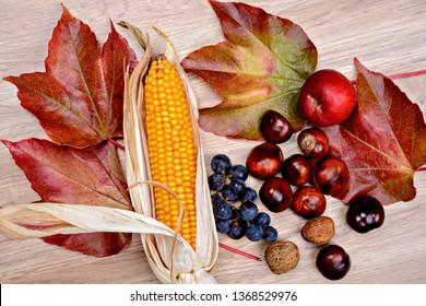autumn still life- grapes, leaves, apple, corncob,chestnut,and walnut  on wooden ground