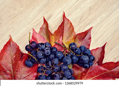 autumn still life- grapes and wine leaves on wooden ground
