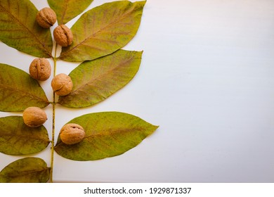 Autumn still life. Leaves and nuts