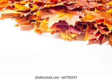 Autumn still life of maple leaves. Warm colors of Autumn. Green and Yellow Autumn Maple Leaf