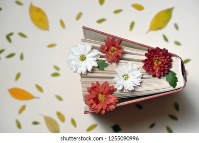 Autumn still life with open book and chrysanthemum flowers
