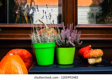 Autumn still life with pumpkins, pink heather and lavender flowers in pots. Decoration near house for Thanksgiving day. Fall Halloween concept on window
