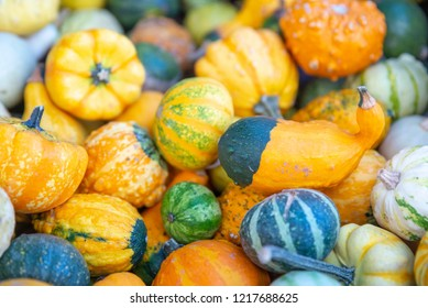 Autumn still life with pumpkins of various colors and sizes. A lot of mini pumpkins at outdoor farmers market.