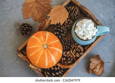 Autumn still life from tray full of pumpkin, leaves, cones, mug of cocoa, coffee or hot chocolate with marshmallow on concrete background. Concept warm home comfort.
