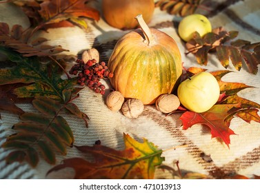 autumn Still Life,Thanksgiving - pumpkins with different nuts , berries and grains