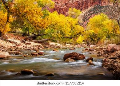 Autumn Stream in Zion National Park
