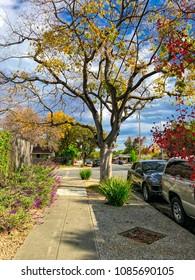 Autumn street in San Jose city, California, USA
