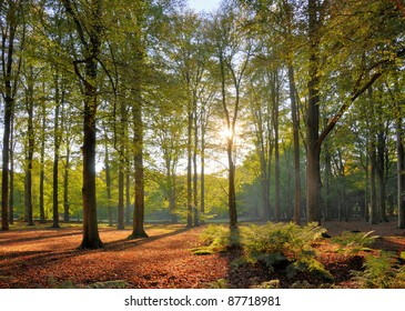 Autumn sun in forest