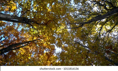 Autumn sun shine with tree tops in forest