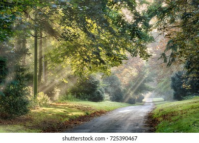 Autumn sunlight rays through trees along a quiet rural road in the early morning mist. Landscape of Norfolk in England