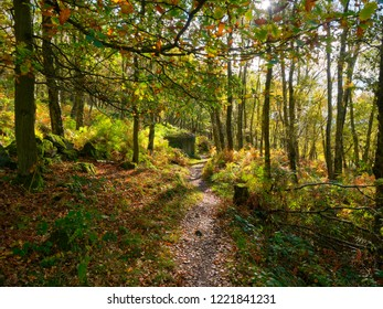 Autumn sunlight shines on a path through Froggat Woods in the Derbyshire Peak District