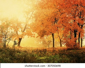 autumn in sunny forest, natural background