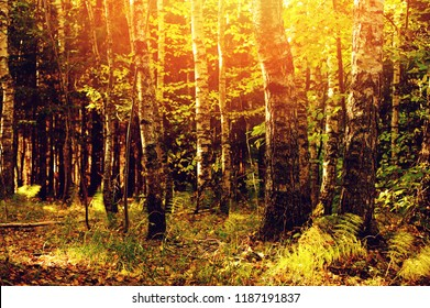 autumn sunny forest view in the morning