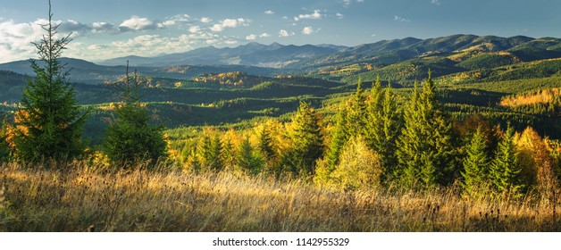 Autumn sunny landscape in the hills mountains with evergreen trees and colorful forest.
