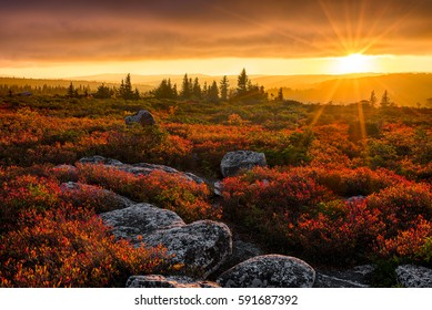 Autumn sunset, Dolly Sods Wilderness, West Virginia
