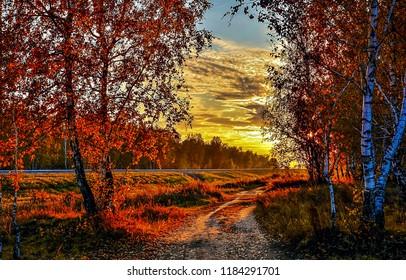 Autumn sunset forest road landscape. Sunset sky clouds above autumn forest road. Sunset autumn forest road view. Autumn sunset forest road
