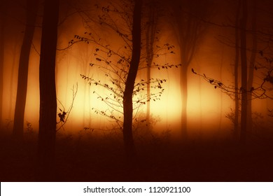 autumn sunset light shining in magical forest with trees in mist