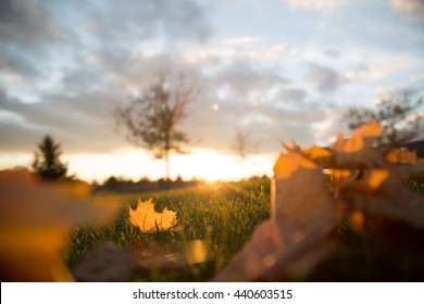 Autumn Sunset - Low Ground Shot