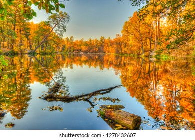 Autumn sunset on the forest lake. Golden trees are reflected in the water. Pushcha Vodytsia, Kiev neighbourhood, UA.
