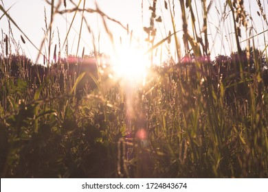 Autumn sunset on green meadow and sunbeams through grass in the evening. Scenery landscape of bright sunrays over green field. Autumn nature. Natural sunlight.