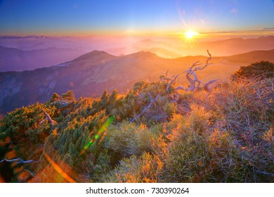 Autumn sunset scenery of Hehuan Mountain East Peak,Clear sunset shine on dead wood by the Trails of Taroko National Park is Chinese traditional aesthetic sense.Hualien, Taiwan, Asia.