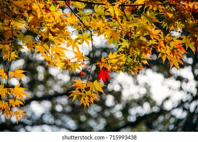 Autumn in Takao, Kyoto, Japan