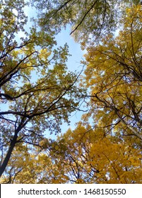 Autumn tall foliage. Yellow leaves on the background of sky