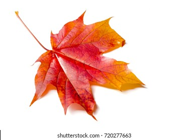 Autumn texture. Colorful maple leaves. The phenomenon is commonly called autumn colours or autumn foliage in British English and fall colors, fall foliage or simply foliage in American English.