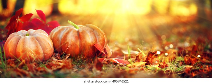 Autumn Thanksgiving day background. Halloween Pumpkins, patch. Beauty Holiday autumn festival concept. Fall scene. Orange pumpkin over beauty bright autumnal nature background. Harvest
