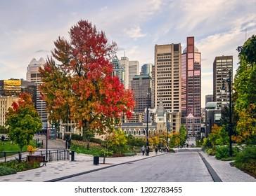 Autumn threes in Canada Montreal