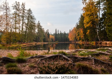 autumn time along pond small  in nature Sumava