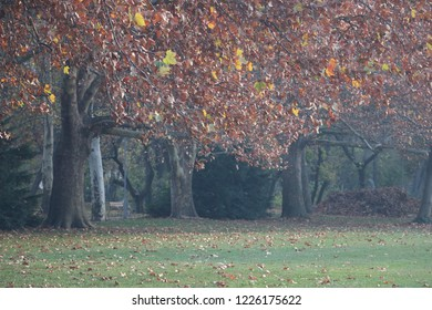 Autumn time at Margaret Island, Budapest.