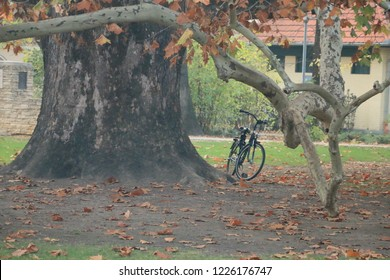 Autumn time at Margaret Island, Budapest. Bicycle