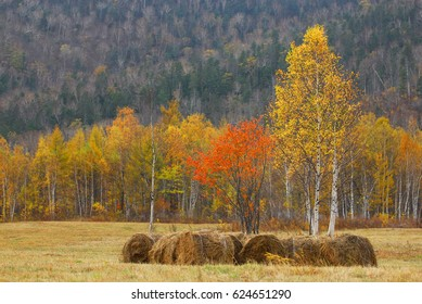 Autumn time. A stack of hay. Autumn forest.