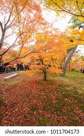 Autumn tints in Japan