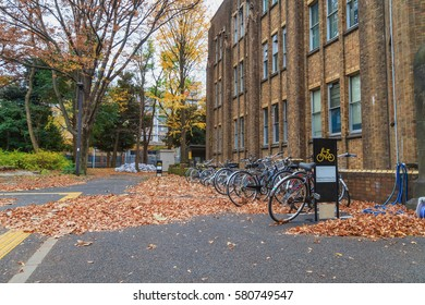 Autumn in Tokyo, Ginkgo tree and bicycles, Japan