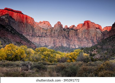 Autumn at the Towers of the Virgin - Zion National Park
