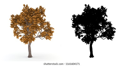 Autumn tree with alpha mask, isolated on white background