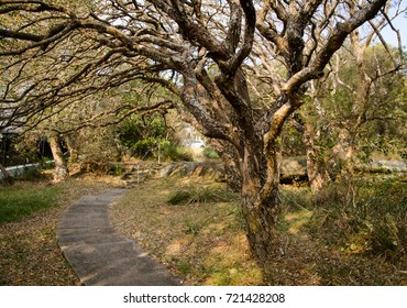 Autumn tree branches in dry forest with walkway.