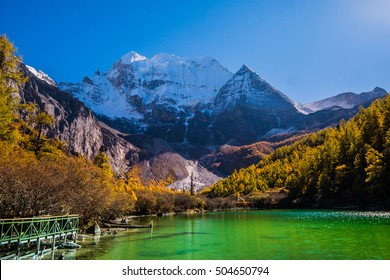 Autumn tree color and Pearl Lake yading with Holy Snow Mountain in Yading national reserve at Daocheng County, in the southwest of Sichuan Province, China.
