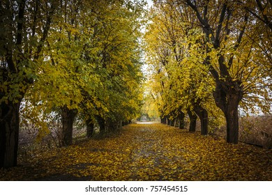 Autumn tree lined avenue in Brescia, Italy