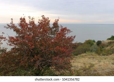 Autumn tree near the reservoir