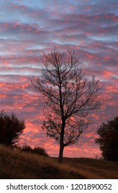 Autumn tree on background of flaming morning sky