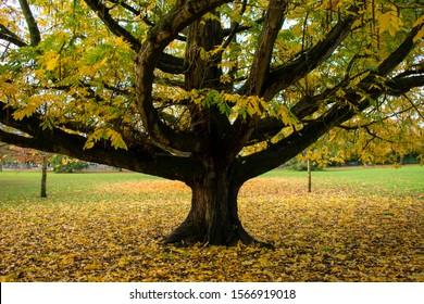 Autumn tree in a park