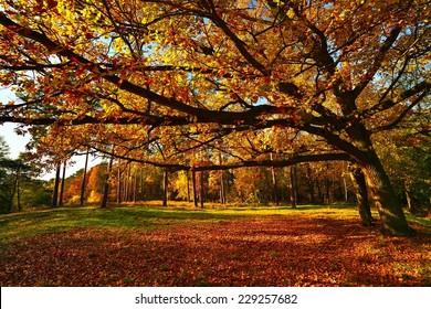 Autumn tree in park.