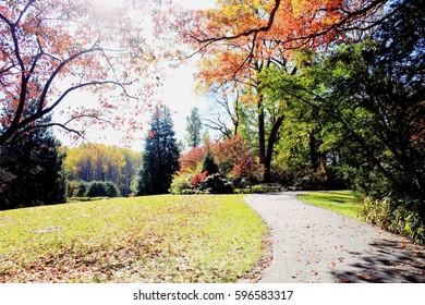 Autumn tree in autumn park.