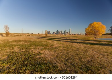 Autumn Tree at a park with downtown Dallas in the background